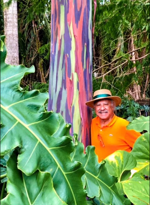 Rainbow Eucalyptus with Pablo