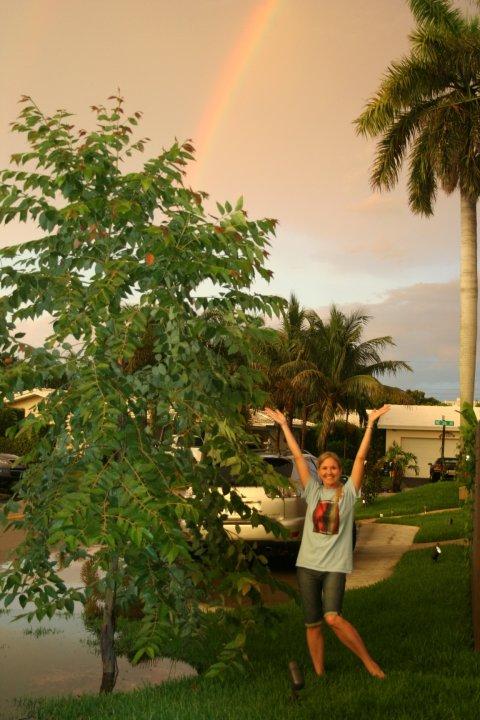Rainbow Eucalyptus South Florida